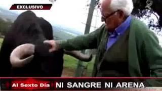 getlinkyoutube.com-Ni sangre ni arena: el lado más sorprendente y enternecedor de los toros