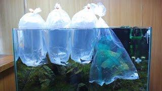 #23.石組レイアウト 水槽立ち上げ part4 茶ゴケ対策 生体投入編(Aquascaping Iwagumi set up)