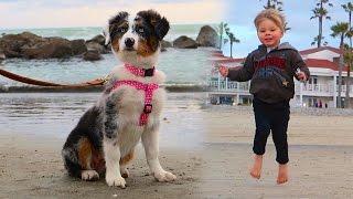 getlinkyoutube.com-PUPPY'S FIRST BEACH TRIP!
