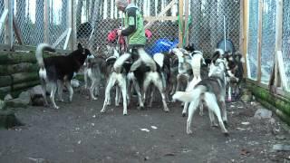 getlinkyoutube.com-Sela och starta ett hundspann