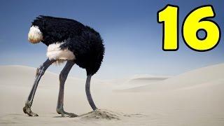 getlinkyoutube.com-16 สัตว์ที่มีความเร็วไวที่สุดในโลก!! 321 กิโลเมตร/ชั่วโมง