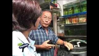 getlinkyoutube.com-คนท้ายซอย ลุงอ๋าเซียนปลากัด
