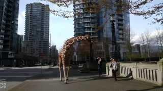 getlinkyoutube.com-Giraffe - Vancouver Film School (VFS)