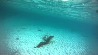 getlinkyoutube.com-Green Moray eel attack, Grand Cayman