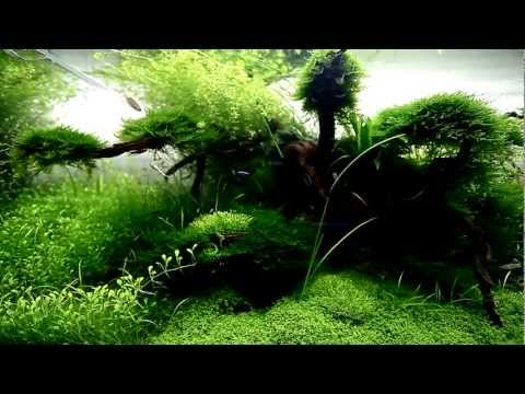 120cm Nature Aquarium