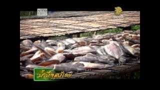 getlinkyoutube.com-น้ำมือคนไทย ปลาสลิดบางบ่อ