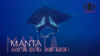 Manta's of Cano Island