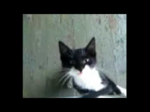 Cat meowing nonstop