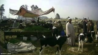 getlinkyoutube.com-جولة في سوق قطور - الجزء الرابع