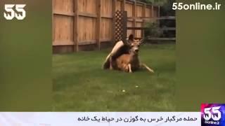 getlinkyoutube.com-حمله مرگبار خرس به گوزن در حیاط یک خانه