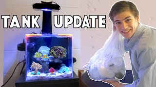 getlinkyoutube.com-Update on My College Reef Tank - CORAL HAUL!