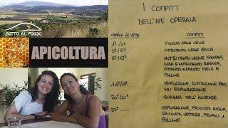 getlinkyoutube.com-Apicoltura in Maremma