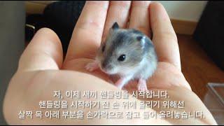 getlinkyoutube.com-日本語,EN] 햄스터방송 #13 ハムスターの子たちの成長過程3, 햄스터 새끼들의 성장과정 3, Hamster pups growing up 3