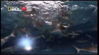 Ch.250 Nat Geo Wild HD Aug14 Highlight