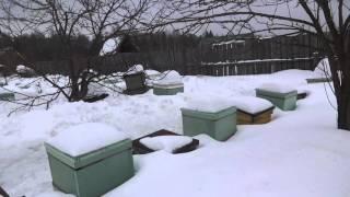 getlinkyoutube.com-Плюсы и минусы ульев из пенополистирола сделанных своими руками при зимовке в наших условиях