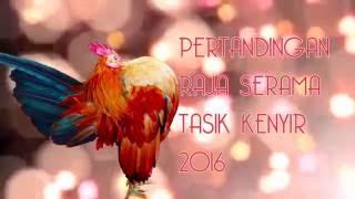 getlinkyoutube.com-Pertandingan Raja Serama Tasik Kenyir 2016