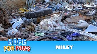 Hope For Paws: A homeless dog living in a trash pile gets rescued, and then does something amazing! width=