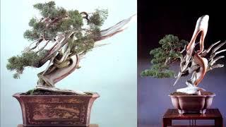 getlinkyoutube.com-Bonsai before and after 2/Bonsai Master - Masahiko Kimura