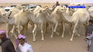 getlinkyoutube.com-مسيره منقيه سعود راشد النفيخ