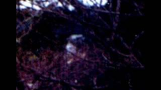 getlinkyoutube.com-【心霊写真】昔の写真に河童っぽいのが写っているんですが。
