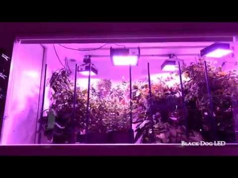 The Ultimate LED Grow Light Indoor Garden