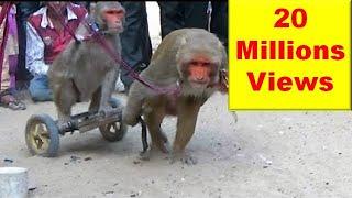 getlinkyoutube.com-Comedy Drama Show Of Funny Indian Monkey , Madari On Street - बन्दर मदारी  का खेल