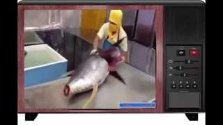 حطم الرقم القياسي فى سرعة  تقطيع السمك