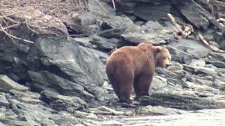 NFL's Larry Csonka Hunts Brown Bear on Alaska's Kodiak Island- Part 1