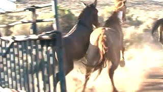 getlinkyoutube.com-Releasing Wild Horses into the Wild