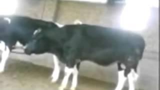 getlinkyoutube.com-سكس حيوانات مضحك
