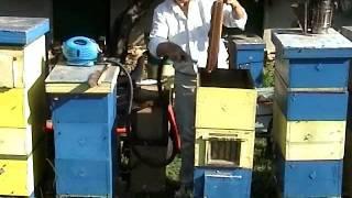 getlinkyoutube.com-Отстраняване на пчелите от питите