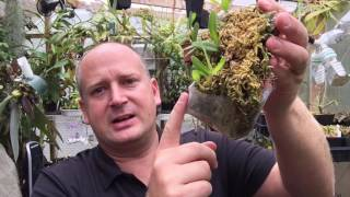 THE FUNNY WAYS I GROW ORCHIDS: THE MOUNTS, THE POTS AND BAGS 1080p