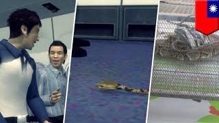 """getlinkyoutube.com-Real life """"Snakes on a Plane"""" in Taiwan when man attempts to ship living python"""