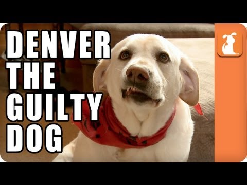guilty dog   loldogs n cute puppies   funny dog pictures   cheezburger