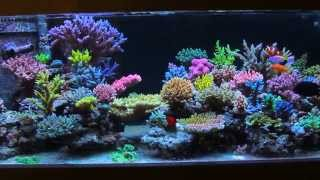 Krzysztof Tryc's reef tank - after 3 months with All in one biopellets