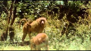 getlinkyoutube.com-Africa salvaje