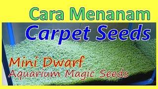 getlinkyoutube.com-AQUASCAPE - Menanam Carpet Seeds (magic seeds) Mini Dwarf