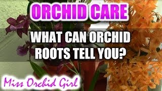 What is your Orchid telling you? - Orchid roots