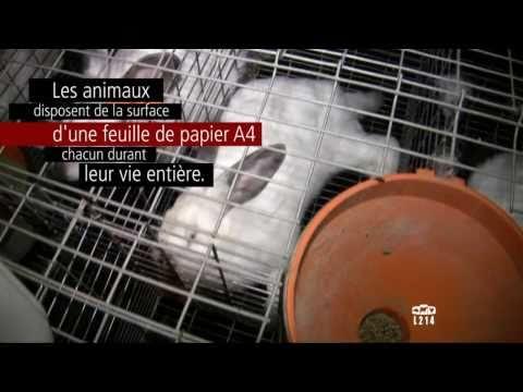 Le modèle alimentaire français : l'élevage des lapins