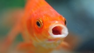 getlinkyoutube.com-Zero Maintenance Fish Barrel!