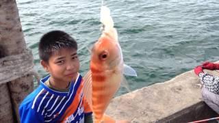 ตกปลา ขั้นเทพ กินเอากินเอา ตกยังไง เอาอะไรทำเหยื่อ  สะพานปลาบ่อทองหลาง