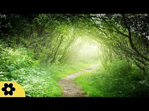 Healing Meditation Music, Relaxing Music, Music for Stress Relief, Background Music, ✿3093C
