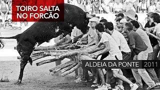 getlinkyoutube.com-Toiro salta em cima do forcão na Capeia Arraiana de Aldeia da Ponte (2011)