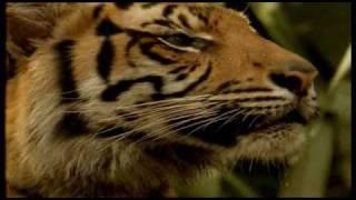getlinkyoutube.com-Kiss Jungle subtitulada.wmv