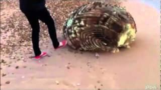 getlinkyoutube.com-Extraño objeto encontrado en una playa de Japón
