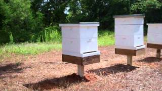 getlinkyoutube.com-My Beehive Setup