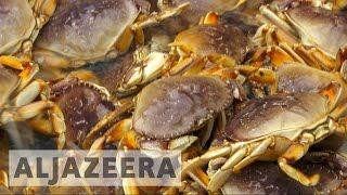 getlinkyoutube.com-US crab fishermen fear future over climate change threat