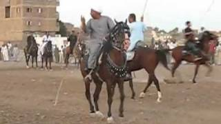 getlinkyoutube.com-رقص خيل فى جنوب مصر يعنى الصعايدة الخيالة