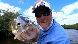 getlinkyoutube.com-Fly Fishing Snook in the Backcountry of the Florida Everglades