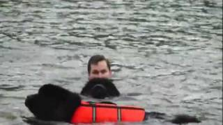 getlinkyoutube.com-Newfoundland Water Dogs Rescue & Retrieve